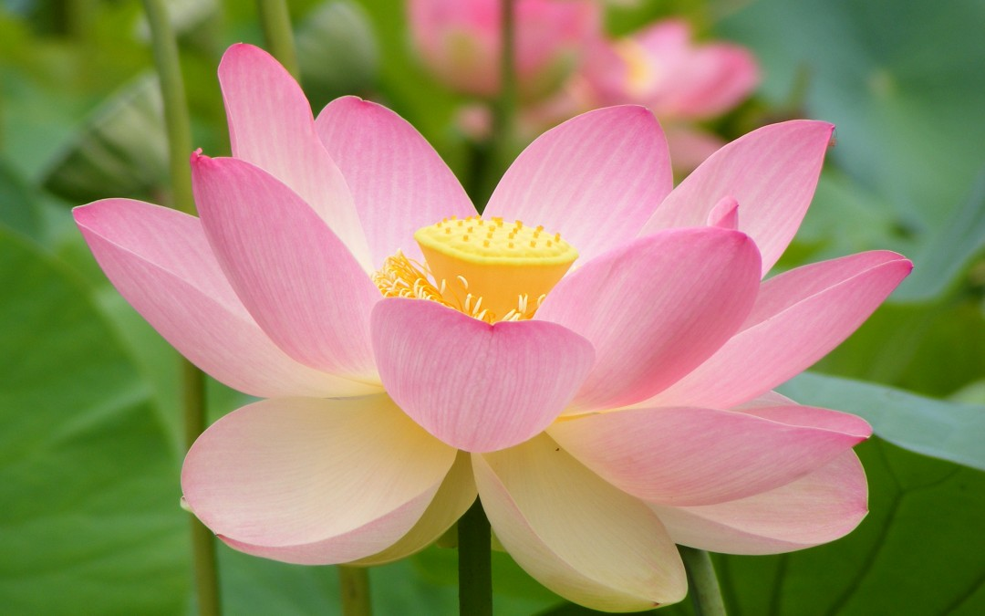 Energy Healing Kriya